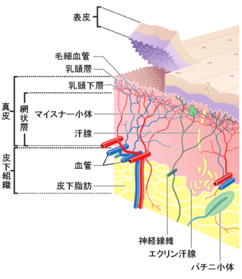 KCIが新皮膚移植技術を取得と発表 - QLifePro 医療ニュース